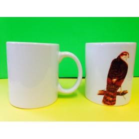 Taza Gavilan / Cup Sparrow-hawk