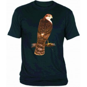 Camiseta gavilán chico